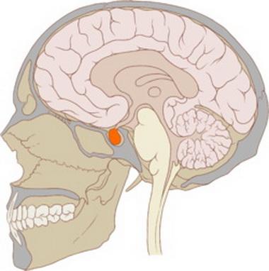 Нейро-эндокринный дисбаланс