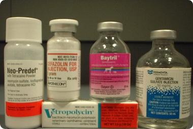 Выбор антибиотиков для парентерального введения