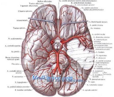 Уровни мозгового кровотока