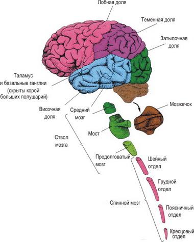 Диагностические критерии ряда патологических состояний