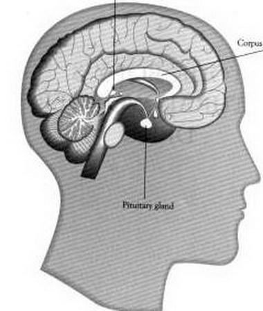 Диагностика синдрома неадекватно высокой секреции антидиуретического гормона