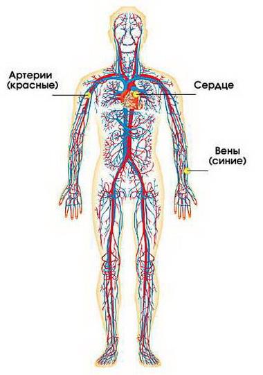 Застой крови — повышение внутричерепного объема крови