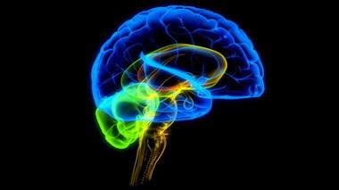 Первичные патогенетические факторы при повреждениях мозга