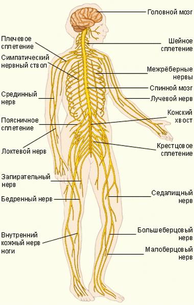 Комплексная оценка состояния и дифференцированная терапия нейрореаниматоло-гических больных с ЧМТ