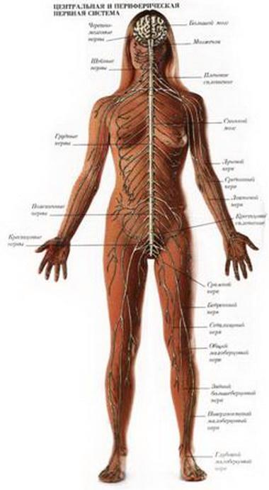 Синдром направленного вверх транстенториального вклинения
