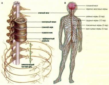 Нарушение функций черепных нервов