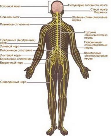 Синдром вклинения крючка гиппокампа и бокового сдавления ствола мозг