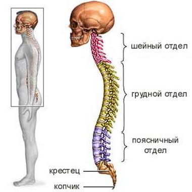 Ушиб спинного мозга