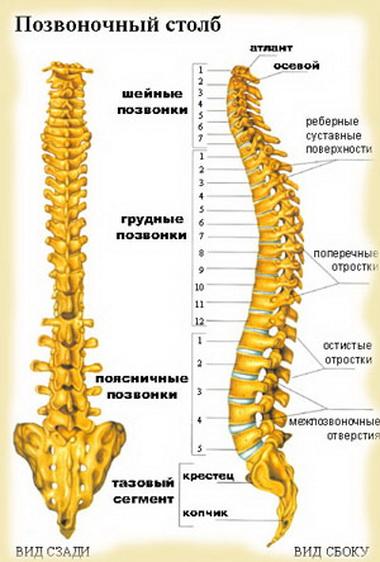 Классификация закрытых повреждений позвоночника и спинного мозга