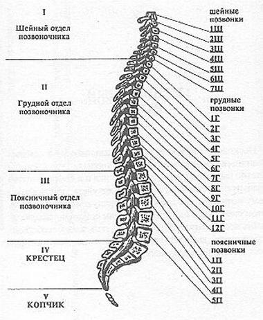 Гематомиелия