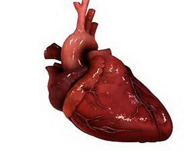 Диагностика ишемических поражений сердца