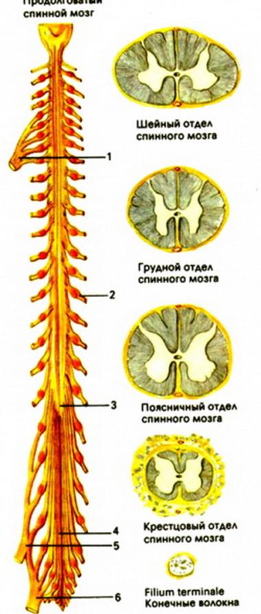 Стандарт оценки неврологических нарушений