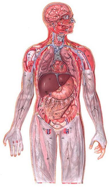 Применение барбитуратов в лечении внутричерепной гипертензии