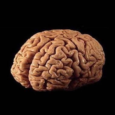 Метаболическая защита мозга карнитином